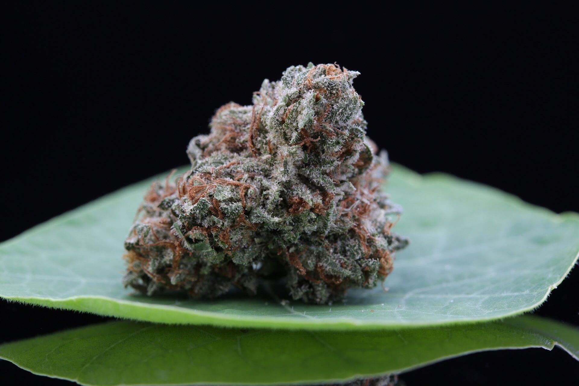 Kings Cannabis